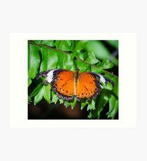 Orange lacewing Art Print