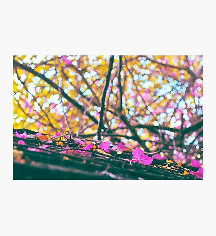 Falling Autumn Petals Photographic Print
