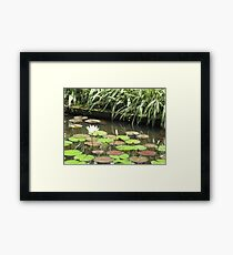 Balinese Lotus Pond green and tranquil Framed Print