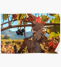 Autumn In The Wine Country Poster