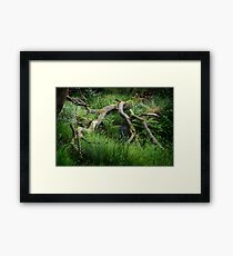 Fallen Tree - Colour Framed Print