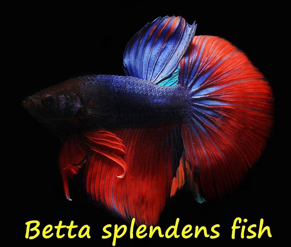 Betta splendens fish by greengoodnich