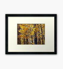 Colorado Aspen Trees in Fall Framed Print