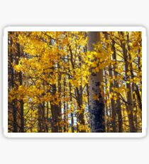 Colorado Aspen Trees in Fall Sticker