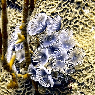 Underwater Feather Flowers by Scubagirlamy
