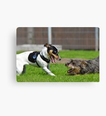 Dogs playing Canvas Print