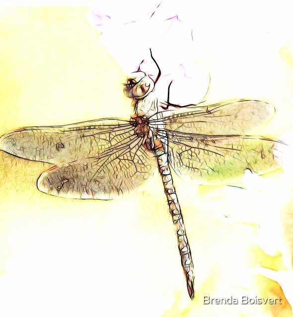 ~ Dragonfly ~ by Brenda Boisvert