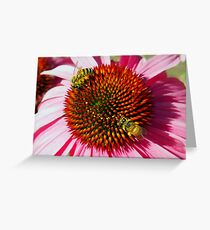 Honey Bees Macro on Echinacea Flower of Summer Greeting Card
