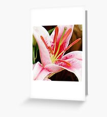 Macro Pink and White Lilly Flower in the Garden Greeting Card