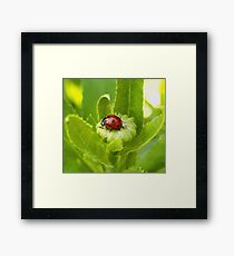 Macro Ladybug on Garden Plant Framed Print