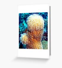 Corky Sea Finger feeding on the Caribbean currents Greeting Card