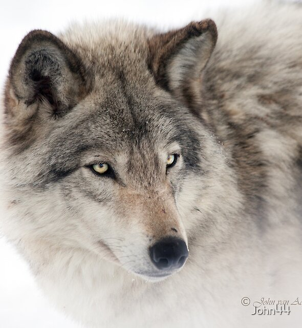 ...see you next week my friend Wolf.... by John44