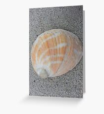 Shell - Abalone Orange & White, Flinders Island Greeting Card