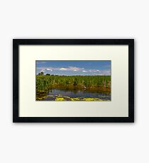 Ashley River - South Carolina II Framed Print