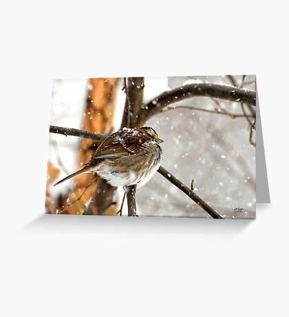 Snowball Greeting Card