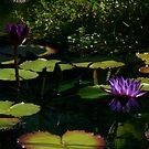 Purplette! by Doug Norkum