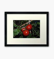 Tomato Brush Framed Print