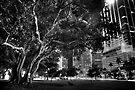 City Tree by Bill Wetmore