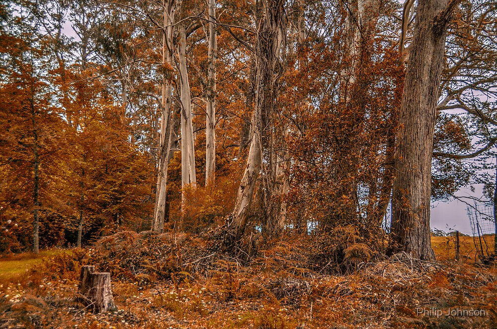 Autumn Dreams - Mount Wilson NSW Australia - The HDR Experience by Philip Johnson