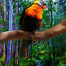 bush color by Glen Johnson