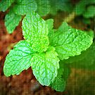 Fresh Mint by tropicalsamuelv