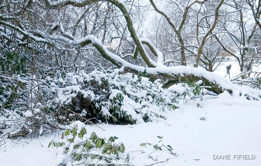 A Winters Tale by DIANE  FIFIELD