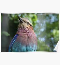 Bird at Lotherton Poster