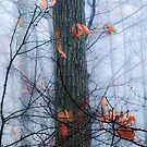 End of Fall by Mary Ann Reilly