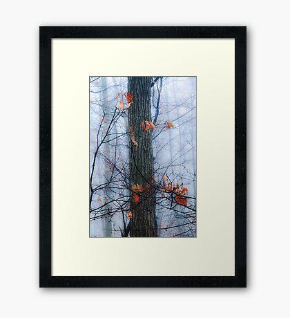 End of Fall Framed Print