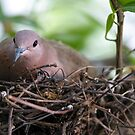 In my nest by mjamil81