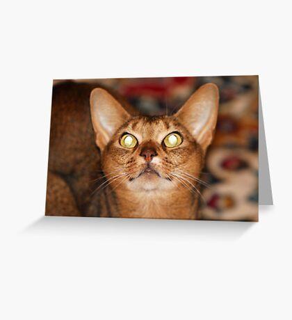 Feline Groovy Greeting Card