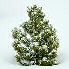 Single Christmas Tree by Luann wilslef