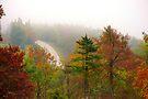 Foggy Morning Road,  Arkansas Ozarks by NatureGreeting Cards ©ccwri