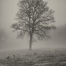 Winters Fog by Maybrick