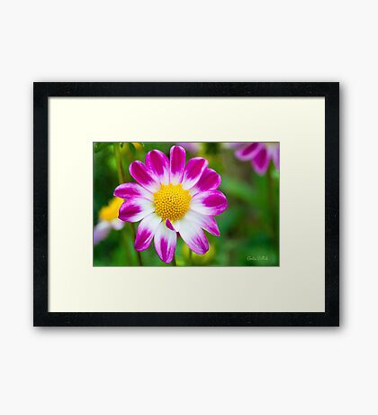 Come Hither, My Sweetheart Framed Print