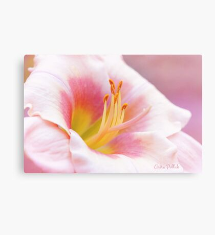 Summer's Gentle Beauty Canvas Print