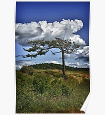 Lonely tree shaped by wind on Puget Sound nature photo art - Testimone del Tempo Poster