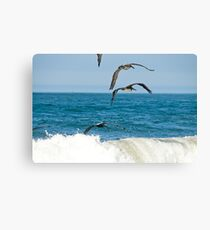 Ocean color pelicans on the Pacific blue teal waves naturalistic wildlife wall art - Squadriglia Canvas Print