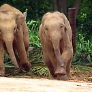 Young elephants running by JenniferLouise