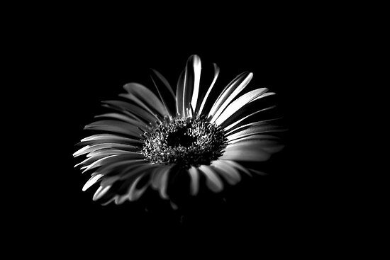 Quot High Contrast Black And White Flower Quot Posters By Martyn