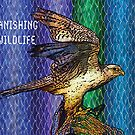 Peregrine Falcon #2 by Dick  Iacovello