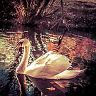 Swan by PaperPlanet