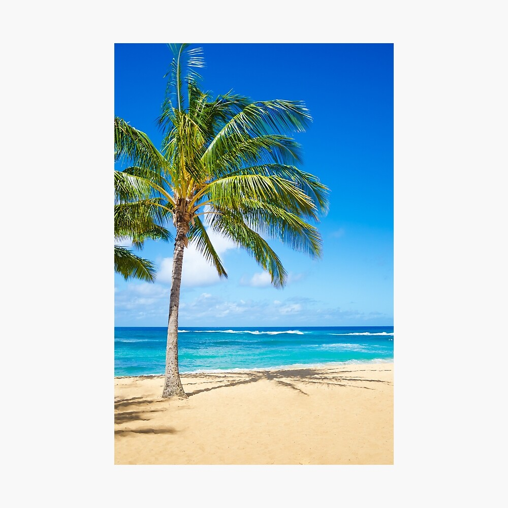 Palm trees on the sandy beach in Hawaii Fotodruck