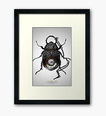 Coleóptero de Bolsillo Framed Print