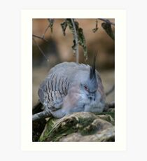 Nesting Bird Art Print