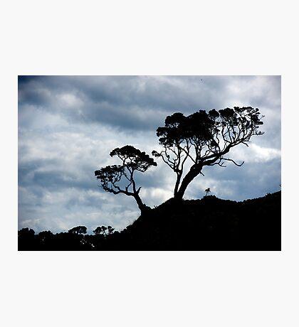 Pohutakawa Tree - NZ Photographic Print
