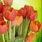 Raindrops on Tulips by Lynn Bolt