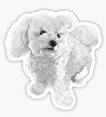 A Beautiful Bichon named Coconut ~ Black and white Sticker