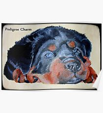 Rottweiler Puppy Portrait With Pedigree Charm Greeting Poster