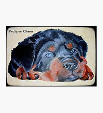 Rottweiler Puppy Portrait With Pedigree Charm Greeting Photographic Print